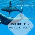 Fish Breeding Bachelors
